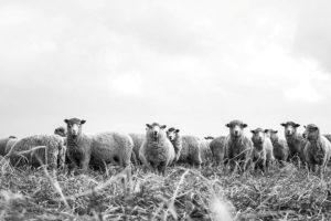 Kako i zašto ide razvojni put znaka ovna